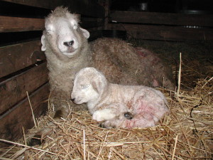 Right after the cesarean, both needed to rest.